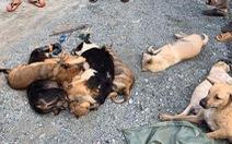 Bị truy đuổi, 2 thanh niên trộm chó nhảy kênh trốn vẫn không thoát