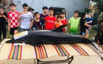 Dân làm nghi lễ chôn cất cá heo 300kg chết dạt trên sông Trường Giang