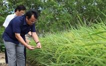 Chủ tịch Bạc Liêu gặp ông Hồ Quang Cua bàn hợp tác trồng lúa ST
