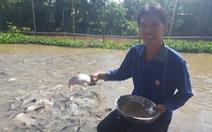 Chi tiền triệu nuôi đàn cá hàng ngàn con kéo đến sống trên kênh Thần Nông