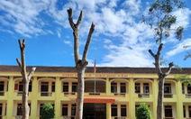 Cắt trụi cây xanh: Nhà trường họp kiểm điểm, rút kinh nghiệm
