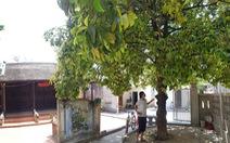 Chuyện chưa kể về cây trái cố đô Huế - Kỳ 3: Giáng châu Gia Định