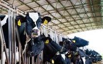 Sữa Việt Nam có đủ sức cạnh tranh với sữa châu Âu?