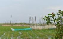 Nước lũ đã tràn đồng giáp biên giới Campuchia, chưa thấy cá tôm