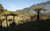 Hòn đảo nhiều loại cây cỏ nhất Trái đất