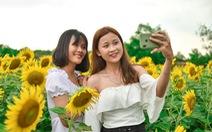 Thỏa thích 'tung tẩy' giữa cánh đồng hoa rực rỡ tại quận 9