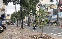 Cây xanh trên nhiều đường TP.HCM 'biến mất': Có hay không lạm dụng đốn cây?