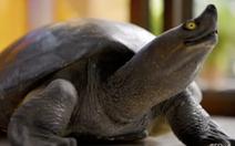 Đại sứ Úc tại Campuchia xin lỗi vì ăn món ăn có rùa quý hiếm