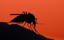 Chưa hết COVID-19, bang Mỹ nỗ lực ngăn căn bệnh chết chóc khác