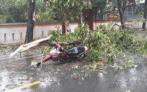 Một chuyên viên Phòng GD-ĐT Huế tử vong do cây ngã đè trong bão số 5