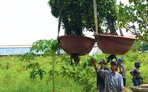 Video: Dân tố chủ tịch UBND xã mượn cây cảnh hàng trăm triệu đồng không trả, UBND huyện vào cuộc xác minh