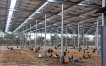 Điện mặt trời kết hợp nông nghiệp vẫn mòn mỏi chờ cơ chế