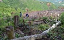 Cả dàn lãnh đạo xã bị kiểm tra dấu hiệu vi phạm trong vụ phá rừng lớn