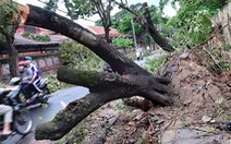 Bảo vệ cây xanh trước gió bão