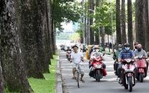 Cây xanh ngã đè người đi đường: Đã đến lúc cho cây lâu năm 'nghỉ hưu'?