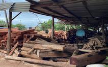 Bắt giam nghi phạm bán gỗ lậu cho doanh nghiệp tư nhân Hùng Ny