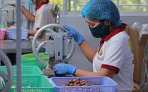 Thủ tướng: cây mắcca giúp dân làm giàu nhưng tránh mở rộng tràn lan