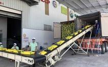 Nông sản Việt bắt đầu hưởng thuế ưu đãi vào châu Âu