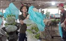 Thúc đẩy xu hướng nông nghiệp sạch