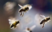 Chọc tổ ong sau trường, 22 học sinh tiểu học phải nhập viện
