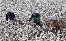 Mỹ cấm sản phẩm từ bông ở Tân Cương vì vi phạm nhân quyền?