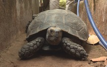 Nuôi nhốt hơn 100 con rùa quý hiếm, người đàn ông ở Buôn Ma Thuột bị khởi tố