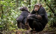 Động vật và thói quen giãn cách xã hội tránh dịch bệnh