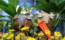 Độc đáo bonsai hình con trâu