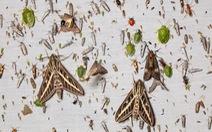Giới khoa học 'báo động đỏ' số lượng côn trùng giảm nghiêm trọng