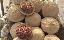 Cách bảo quản hoa quả luôn tươi ngon suốt nửa năm tại Afghanistan