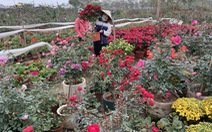 Tấp nập buôn bán, làng trồng hoa Hạ Lôi gỡ gạc sau lần bị phong tỏa