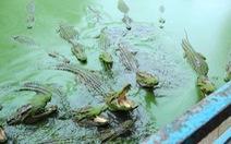 Một ngày trải nghiệm ở Hoa Cà Farm - Làng cá sấu Sài Gòn