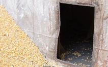 Tàu chở hàng có 'vách ngăn bí mật' nghi rút trộm trên 50 tấn hạt bắp
