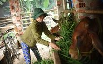 Nông dân Bình Định quyết tâm vượt qua nghịch cảnh với vốn vay từ GreenFeed