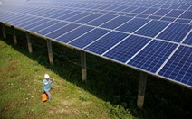 Chính sách giá FIT mua điện mặt trời đã bộc lộ những hạn chế
