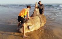 Loài cá 'quái vật' nặng hàng tấn và 'siêu lười'