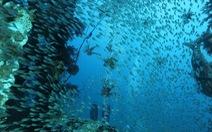 Loài nhuyễn thể bản địa ở Đông Địa Trung Hải giảm mạnh