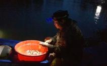 Đỉnh lũ Đồng bằng sông Cửu Long dưới báo động 1, ít cá tôm, không 'chợ âm phủ'