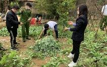 Phát hiện người đàn ông trồng gần 3.000 cây cần sa, anh túc trong vườn nhà