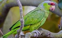 Australia lập ngân hàng DNA chống buôn lậu động vật hoang dã