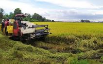 Nông dân trồng lúa thắng lớn