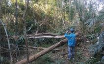 Đề xuất lắp camera để giám sát rừng, phòng ngừa lâm tặc