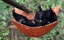 'Bảo mẫu' rừng xanh  - Kỳ 1: Hồi sinh sau tháng ngày ở địa ngục