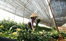 Hoa Đà Lạt phập phồng về Sài Gòn