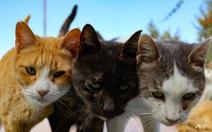 Hàn Quốc xét nghiệm COVID-19 cho chó và mèo có triệu chứng sốt, ho