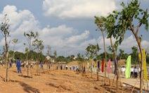 Bình Phước bỏ 54 tỉ đồng trồng 1 triệu cây xanh trong năm 2021