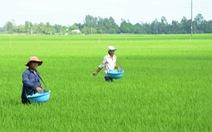 Phân DAP 'khan hàng, sốt giá' kéo dài: Họp khẩn với các nhà sản xuất trong nước