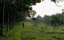 Giám đốc lâm trường lấn chiếm đất rừng vẫn được bổ nhiệm lại