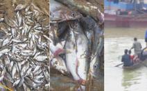 Cá chết nổi trắng sông ở Nghệ An, dân vớt đem ra chợ bán