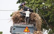 Công an Đắk Lắk cảm ơn Tuổi Trẻ Online phản ánh xe mía lộng hành trên quốc lộ 26